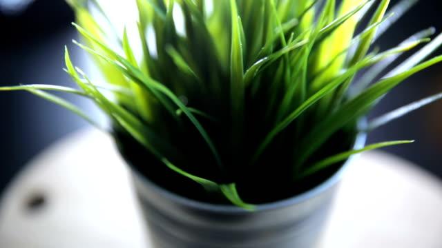 stockvideo's en b-roll-footage met pot plant gras - kamerplant