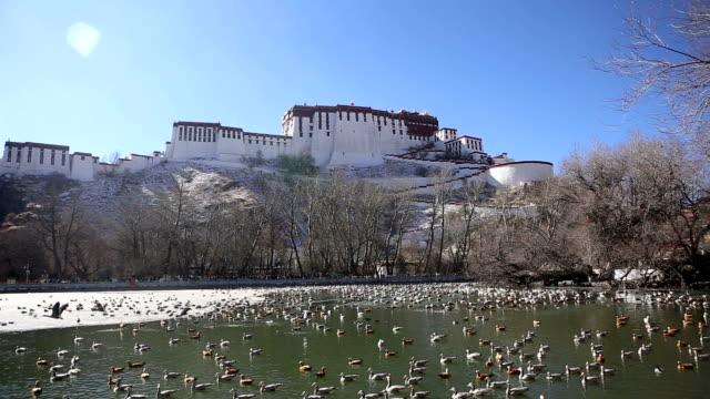 冬のポタラ宮宮殿 - グレイグース点の映像素材/bロール