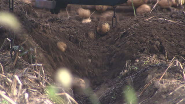 potato digging operation by tractors potato being dug out of ground close up shot potato farmland in nisekocho - potato stock videos and b-roll footage