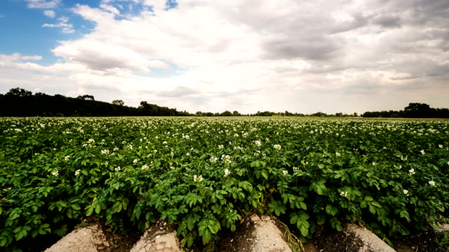 potato field time lapse - raw potato stock videos & royalty-free footage
