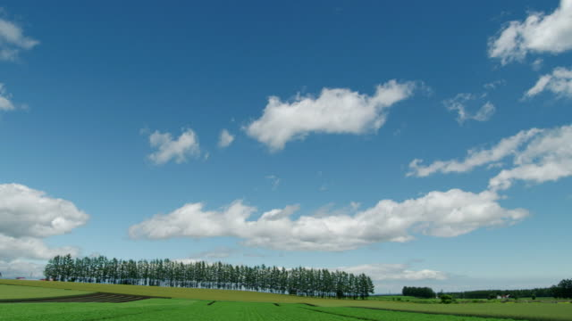 potato field under blue sky, hokkaido, japan - swaying stock videos & royalty-free footage