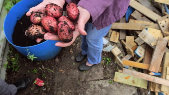 potato harvesting - red potato stock videos & royalty-free footage