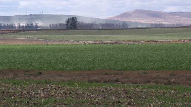 potato irigation system wide - wiese stock videos & royalty-free footage