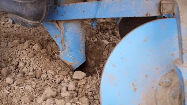 vidéos et rushes de de pommes de terre planter'semer la pomme de terre - pomme de terre rouge