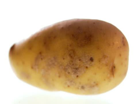 a potatoe. - テーブルトップショット点の映像素材/bロール