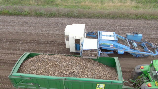 Potatoes being harvested by machine