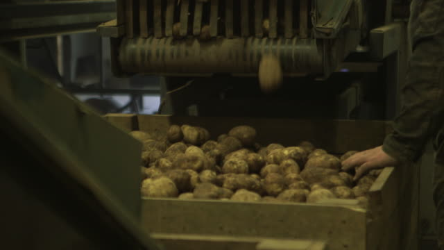 potatoes drop from conveyor belt in warehouse, uk - fade out stock videos & royalty-free footage