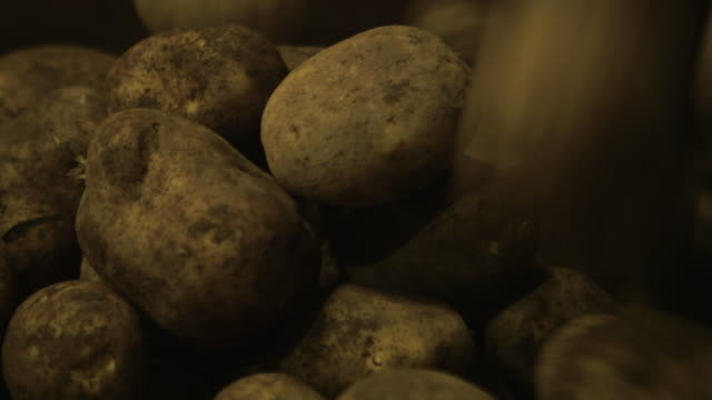 "potatoes drop from conveyor belt in warehouse, uk - ""bbc natural history"" video stock e b–roll"