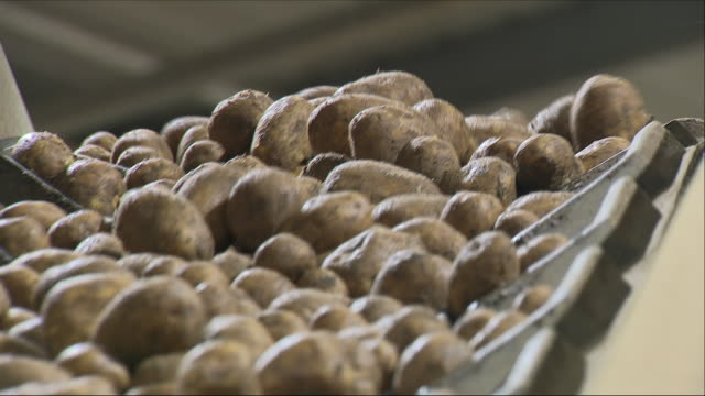 potatoes on a  factory production line - potato stock videos and b-roll footage