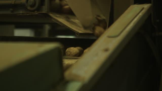 potatoes on conveyor belt in warehouse, scotland, uk - warehouse stock videos & royalty-free footage