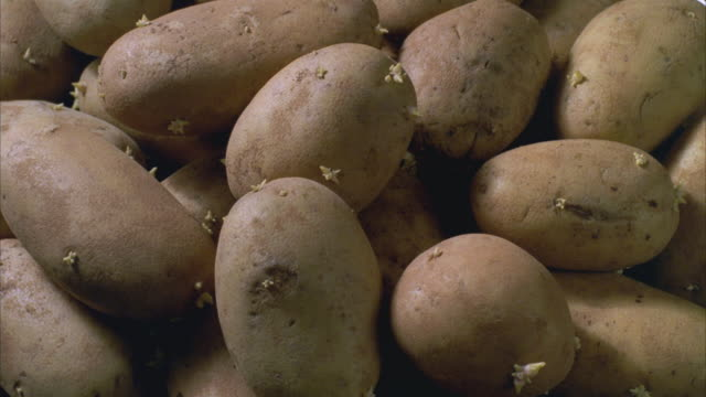 WS DS T/L Potatoes revolve while sprouting rotting and decomposing / Santa Barbara, California, United States
