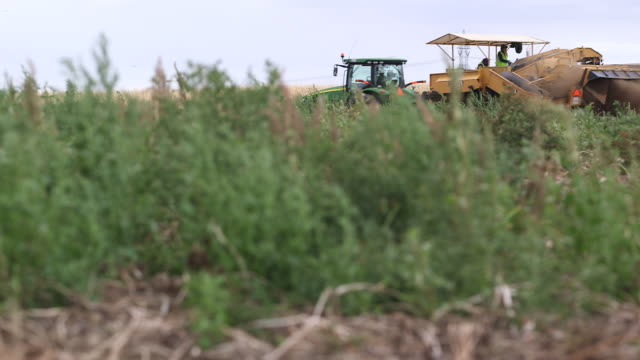 pototo harvester moves thru frame r-l - wiese video stock e b–roll