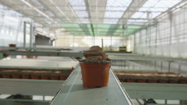 POV MS pots filled with soil moving along conveyor belt in greenhouse, RED R3D 4K