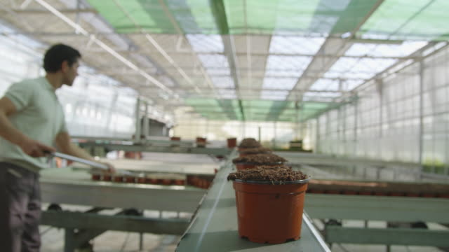 POV MS pots filled with soil moving along conveyor belt in greenhouse with man in background using fork to transfer the pots to a growth platform RED R3D 4K