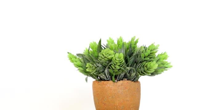 鉢植えの花 - 鉢植え点の映像素材/bロール