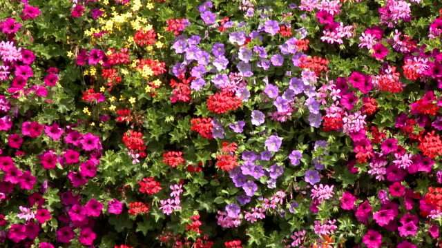 Potted flowers of various colors on balcony
