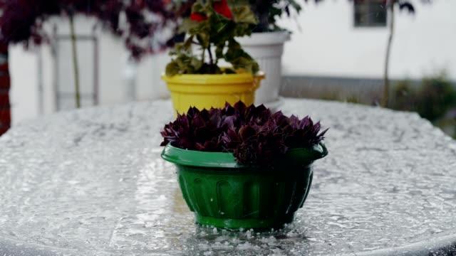 Topfpflanzen im Regen