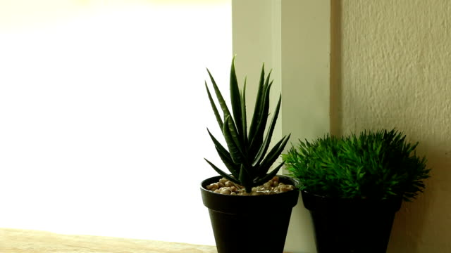 Potted plants placed by the window in the daytime.