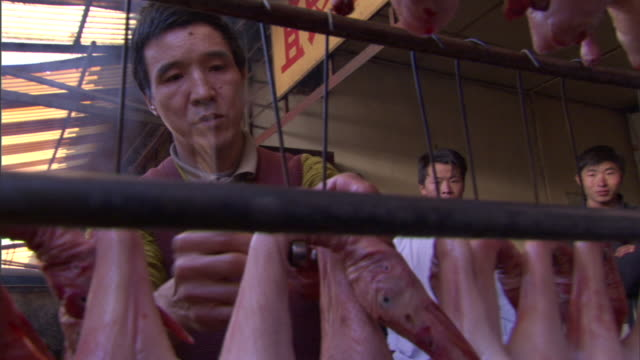 stockvideo's en b-roll-footage met cu pan poultry seller arranging rack of ducks for sale in weishan market, yunnan, china - sale