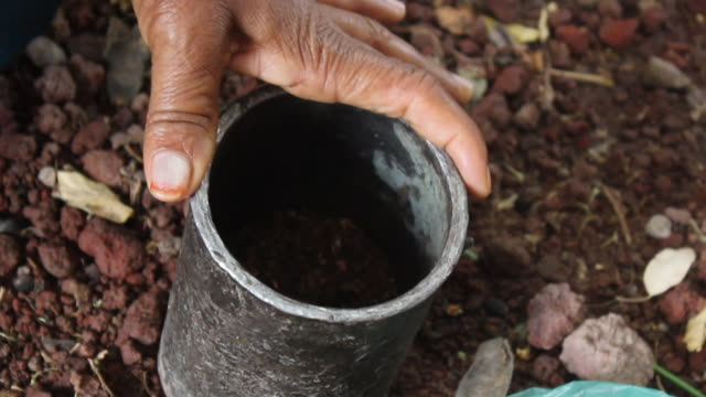 pounding coffee grains for coffee ceremony - mortar and pestle stock videos and b-roll footage
