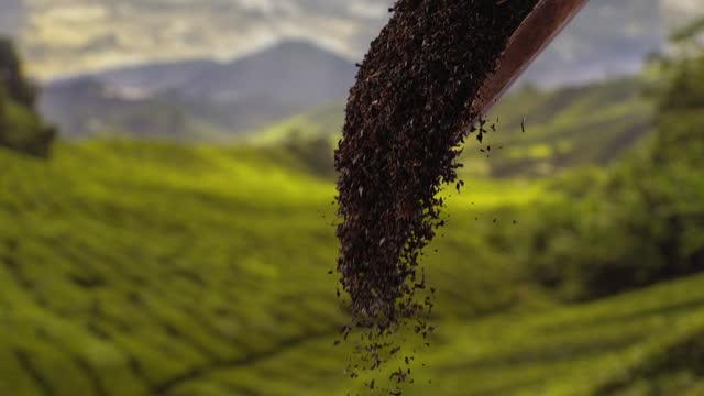 pouring black tea leaves - black tea stock videos & royalty-free footage