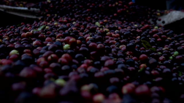 pouring coffee bean slow motion - scented stock videos & royalty-free footage