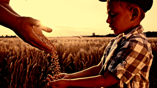 SLO MO gieten graan maïs in boy's hand