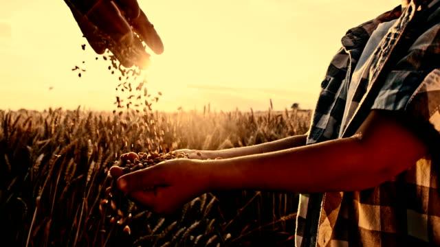 vídeos de stock, filmes e b-roll de slo mo preparar milho milho na mão da criança - milho