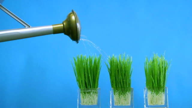 pouring grass .. - watering can stock videos & royalty-free footage