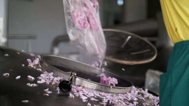pouring pink rose blossoms in distillery vessel, essential oil production - making stock videos & royalty-free footage