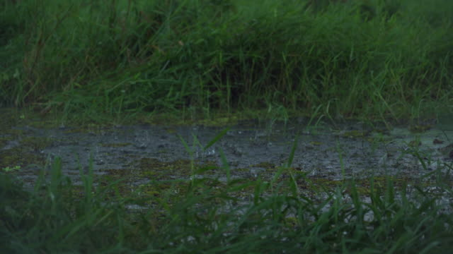 pouring rain over field / sudd swamps, south sudan, africa - 最大点の映像素材/bロール