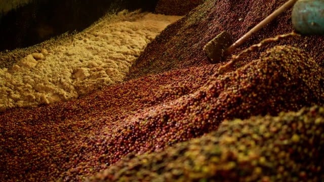 pouring the coffee berries , slow motion - bean stock videos & royalty-free footage