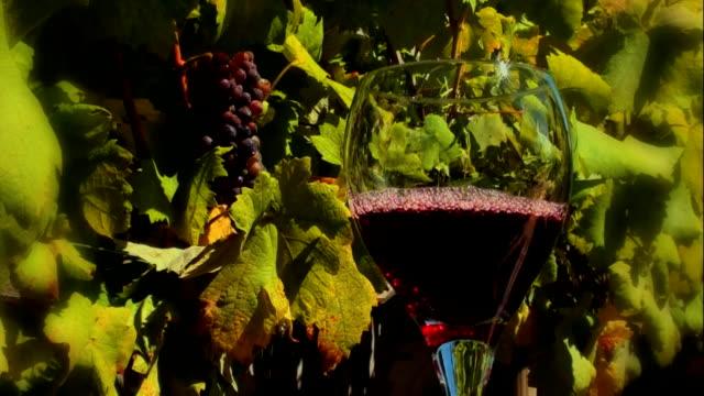 Pouring Vino