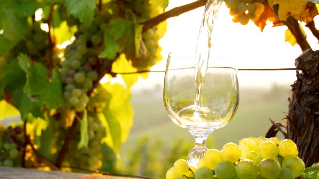 hd super slow-mo: pouring wine in a sunny vineyard - white wine stock videos & royalty-free footage