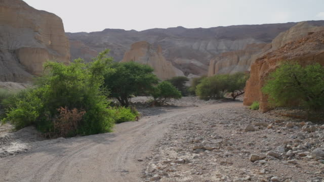 pov: a sandy path through rocky desert cliffs by lush green shrubs - dead sea, israel - clima arido video stock e b–roll