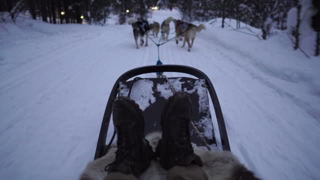 pov dog sledding through the snow - sledge stock videos & royalty-free footage