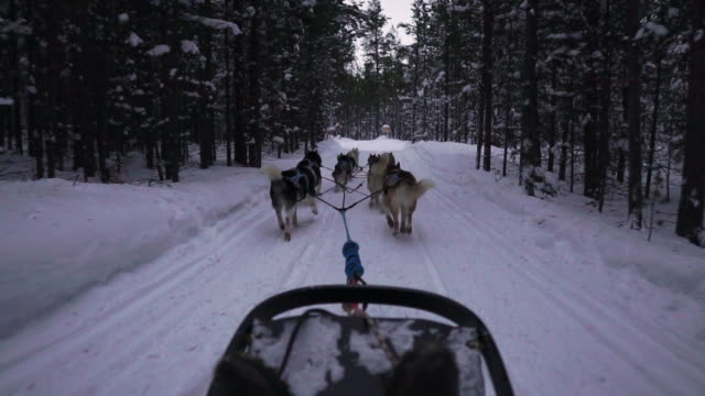 pov dog sledding through the snow - canine stock videos & royalty-free footage