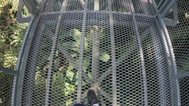 pov of  shoe walking on canopy trail in rain forest