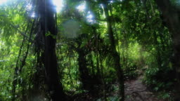 pov shot of man walking at rainforest jungle in trekking trail adventure.exploration summer vacation activity