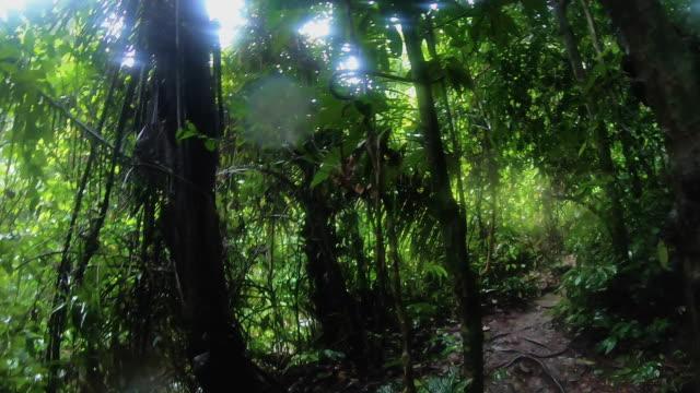 vídeos y material grabado en eventos de stock de pov disparo de hombre caminando en la selva tropical en trekking trail aventura.exploración de la actividad de vacaciones de verano - boscaje