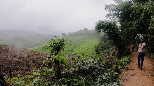 vídeos de stock e filmes b-roll de pov shot of man walking at rainforest jungle in trekking trail adventure.exploration summer vacation activity - explorador