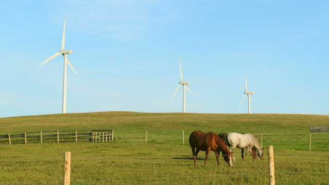 hd: power generating wind turbines - alberta stock videos & royalty-free footage