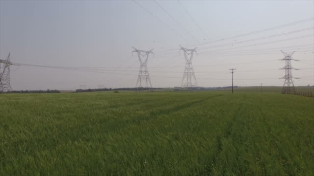 vídeos de stock, filmes e b-roll de campo de trigo e linha de força. - cabo de alta tensão