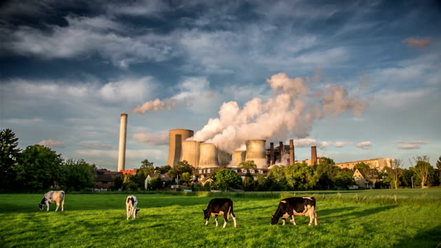 power plant - cattle stock videos & royalty-free footage