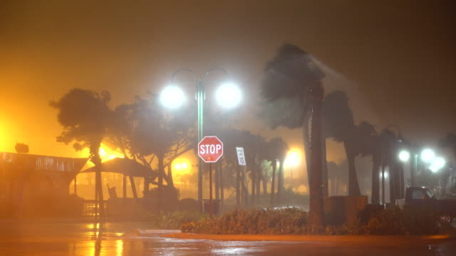 powerful hurricane force winds roar, and tear through port canaveral, as hurricane matthew approaches the florida coast. palm trees sway violently in... - gale stock videos & royalty-free footage