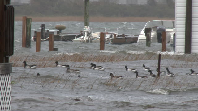 A powerful nor'easter causes boats on Jamaica Bay to rock back and forth in strong winds