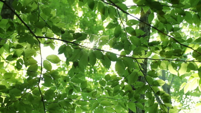 powerful sunshine through canopy - leaf stock videos & royalty-free footage