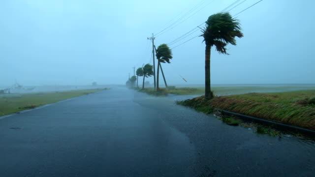 powerful wind and rain from typhoon haishen lash amami oshima, japan - palm tree stock videos & royalty-free footage