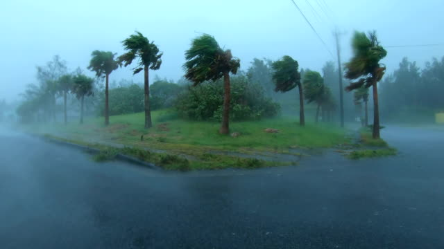 powerful wind and rain from typhoon haishen lash amami oshima, japan - gale stock videos & royalty-free footage