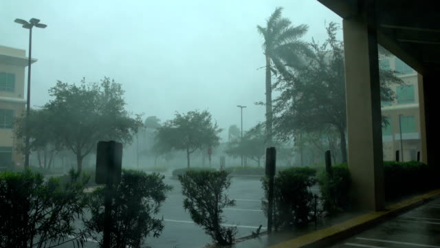 powerful wind and rain lash naples, florida as hurricane irma makes landfall - naples florida stock videos & royalty-free footage